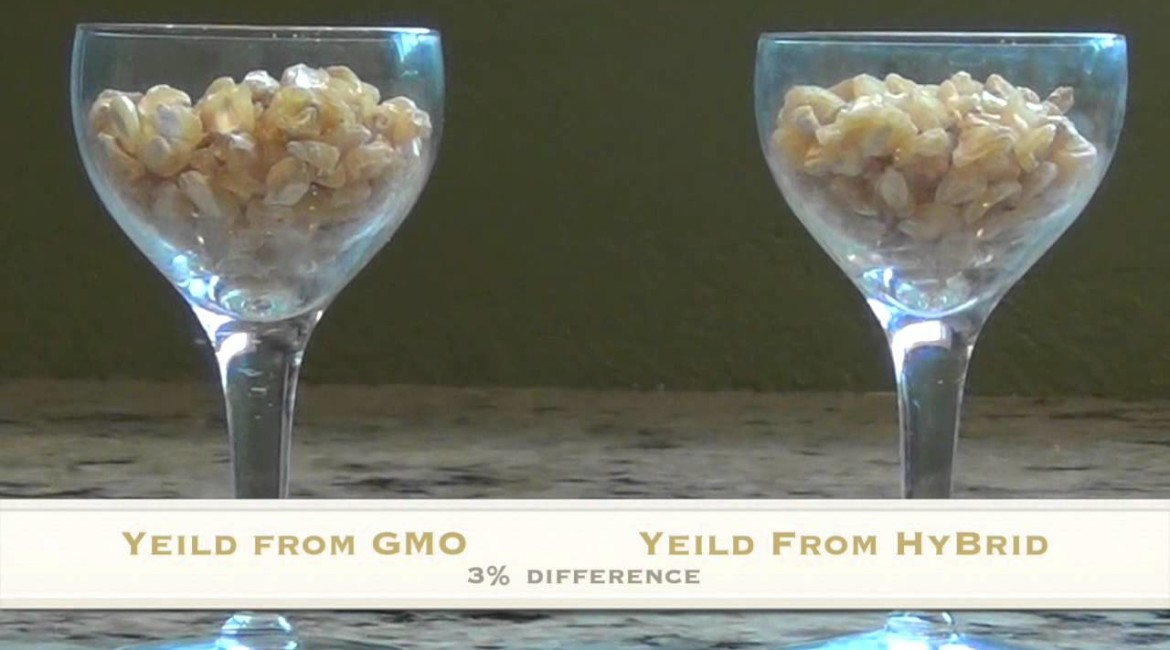 False Choices: GMOs vs World Hunger