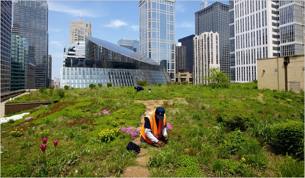 green-roof-economic-development